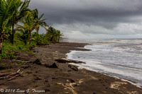 Tortuguera - Green Turtle Beach